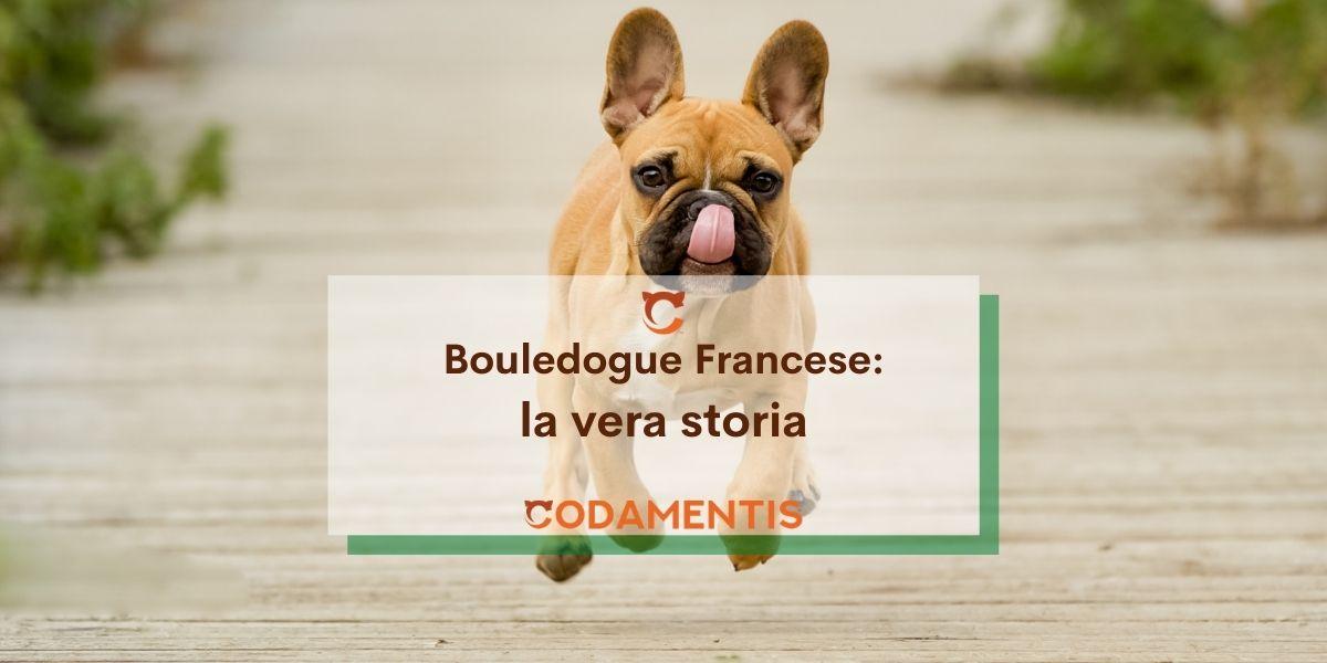 Bouledogue Francese: la vera storia