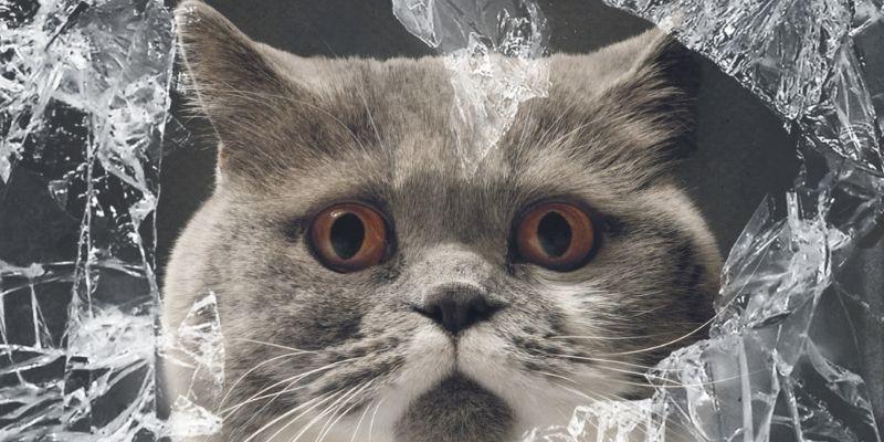 assicurazione rc gatto incidenti