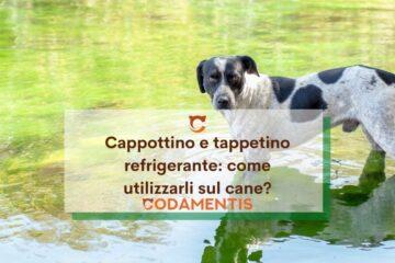 cappottino e tappetino refrigerante cani come sceglierlo e usarlo