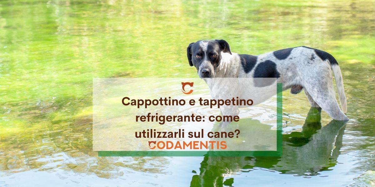 Cappottino e tappetino refrigerante per cani: come usarli?