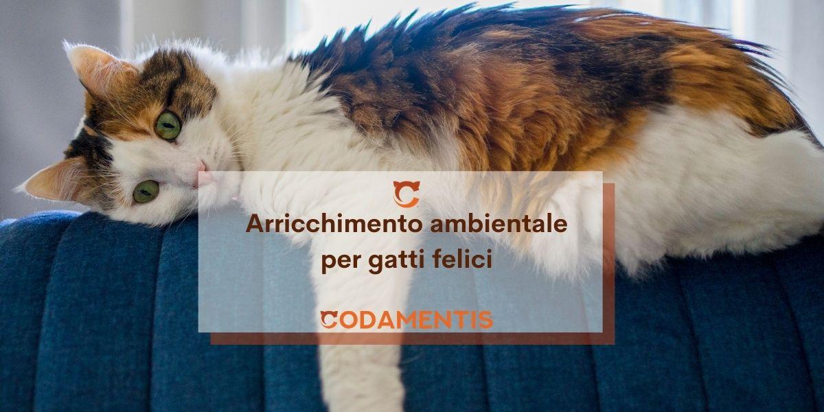 Una casa a misura di gatto: spazio, arredamento e accessori