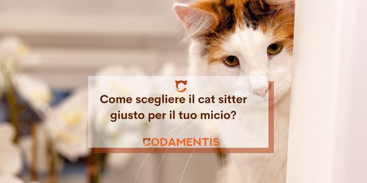 Cat sitter: chi è, cosa fa e come sceglierlo