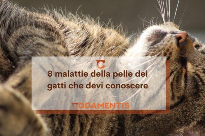 8 malattie della pelle dei gatti che devi conoscere