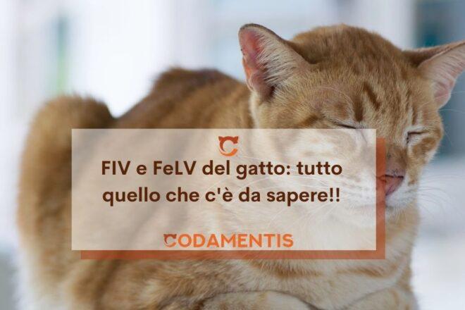 FIV e FeLV del gatto tutto quello che devi sapere