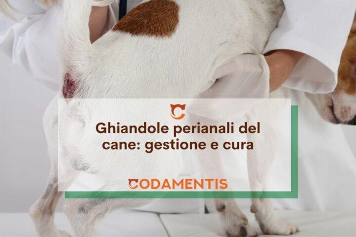 ghiandole perianali del cane gestione e cura