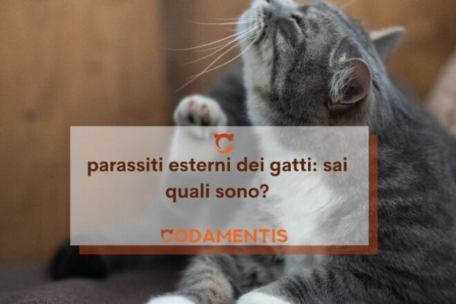 parassiti esterni dei gatti quali sono
