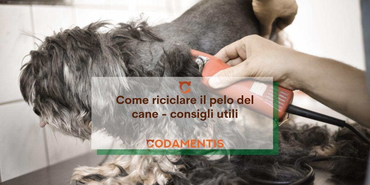 Lana di cane: 5 modi per riciclare il pelo di fido