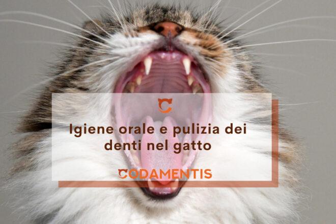 Igiene orale e pulizia denti gatto