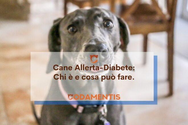 cane allerta diabete codamentis