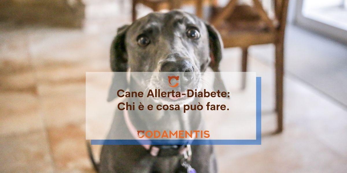 Cani da allerta diabete