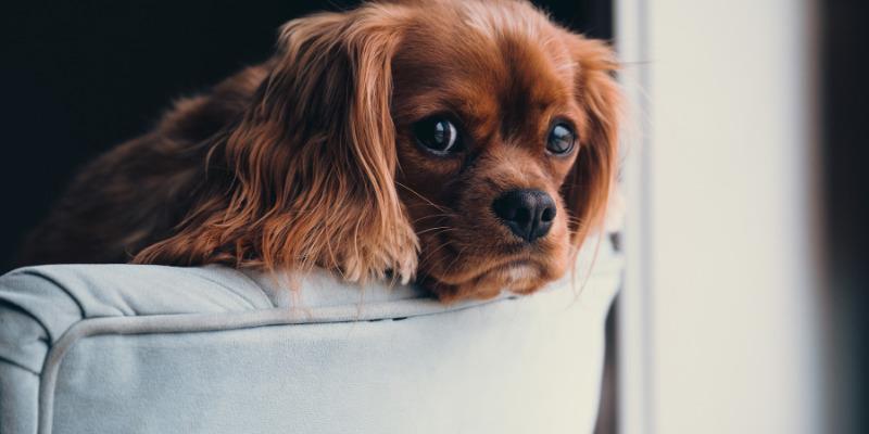 cani soli in casa