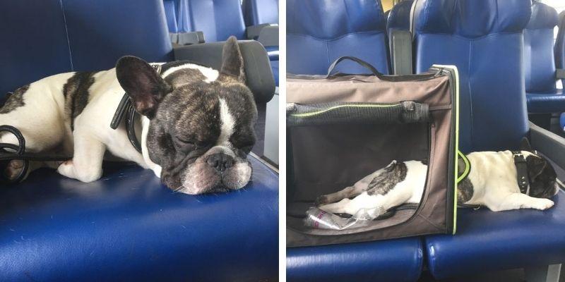 cane in treno nel trasportino