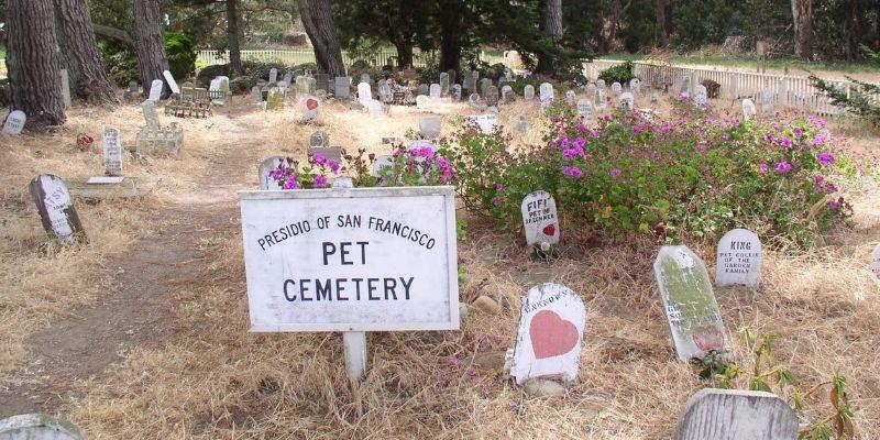 cimitero cani e gatti
