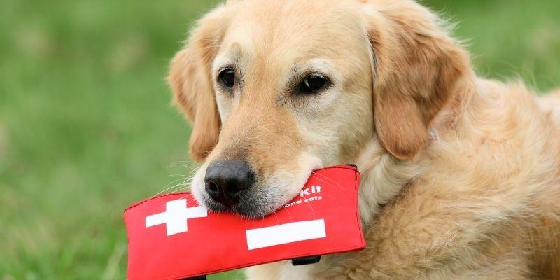 emergenze in viaggio con cane