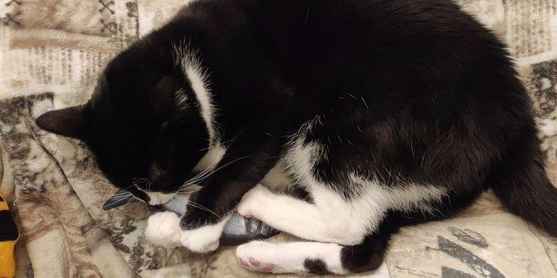 gatto gioca con matatabi