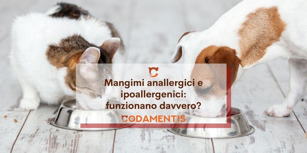 Mangimi anallergici o ipoallergenici? funzionano davvero?