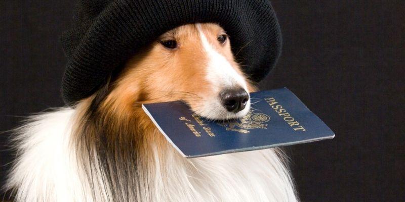 documenti per viaggiare con il cane
