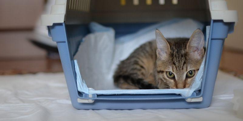 arrivo gatto in casa con trasportino