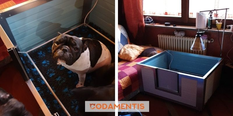 cassa parto cane cucciolata casalinga