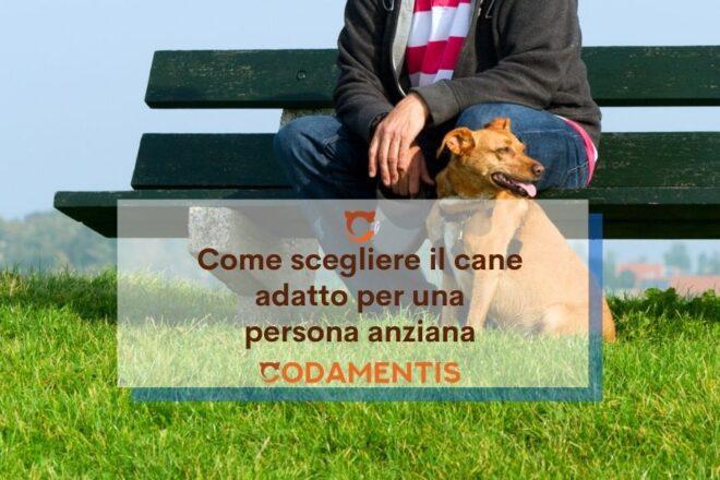 cane per anziani da compagnia