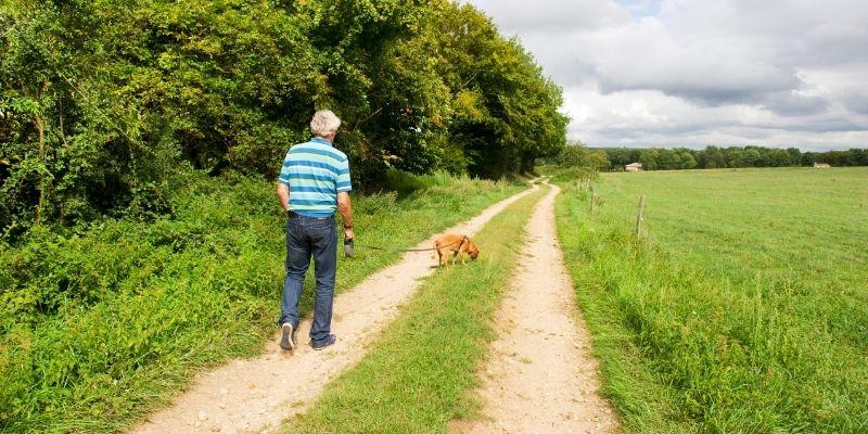 razze cane per anziani in campagna