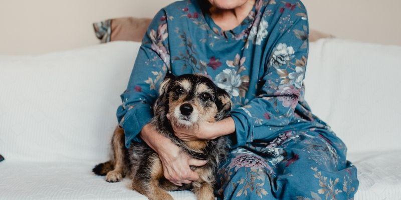 cane per anziani taglia piccola
