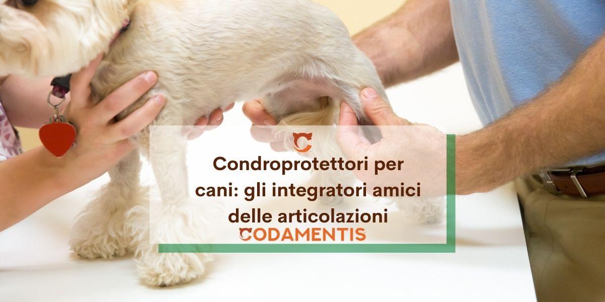 Condroprotettori per cani: gli integratori che aiutano la salute delle articolazioni