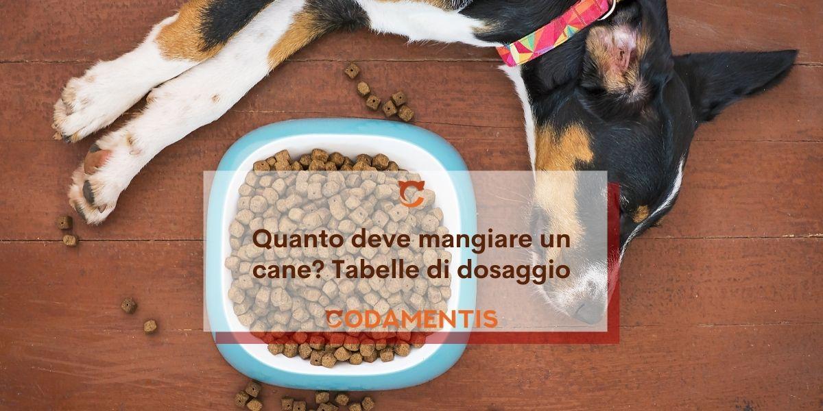 Quanto deve mangiare un cane? Tabelle di dosaggio e fabbisogno giornaliero