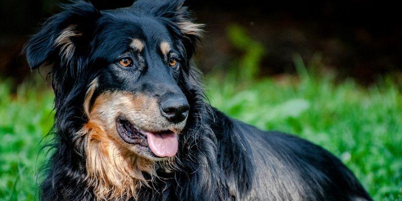 cane adulto autonomo fiducia
