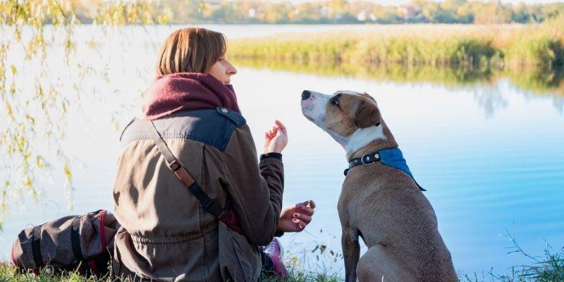 comunicare con il cane comportamento