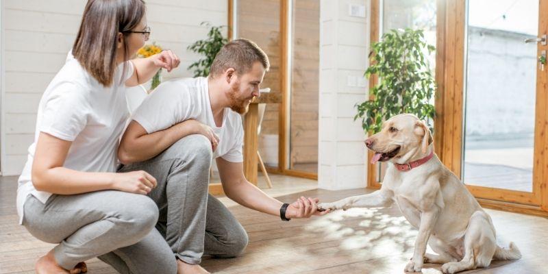 accogliere cane in casa