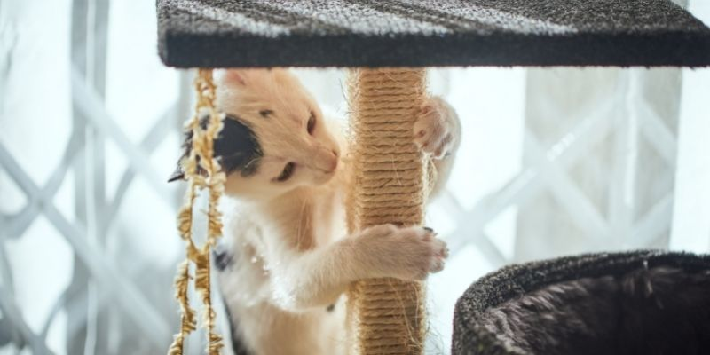 tiragraffi gatto corda
