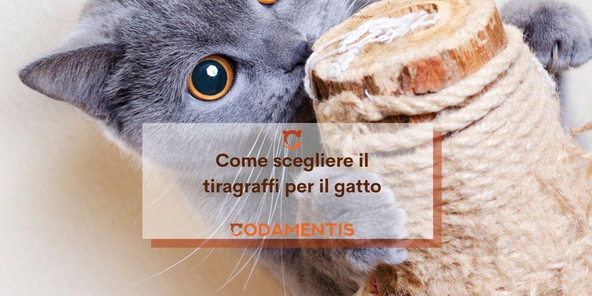 Tiragraffi per il gatto: quale scegliere e perché